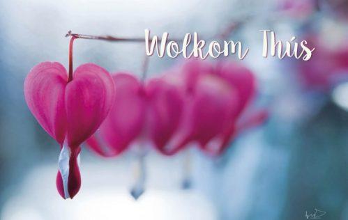lokwinske-nl-4seasons-fries-845-wolkom-thus