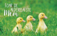 lokwinske-nl-4seasons-fries-846-foar-de-alderleafste-mem