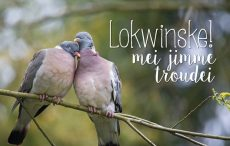 lokwinske-nl-4seasons-fries-864-lokwinske-mei-jimme-troudei