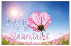 lokwinske-nl-4seasons-fries-913-ik-stjoer-dy-in-sinnestriel