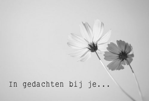 lokwinske-nl-wenskaarten-zwart-wit-079-in-gedachten-bij-je